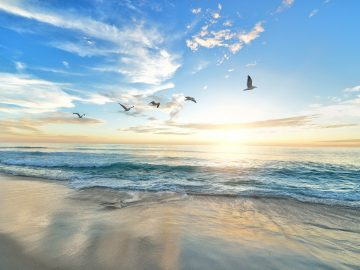 Beach with birds summer swim